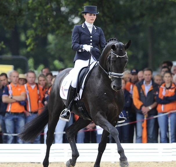 Astrix KWPN Dressage Stallion