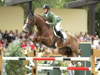 Top ranked Show Jumping Stallions-For Plesaure