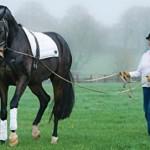 Jennie Loriston Clarke profiled professional rider on Horse Socut