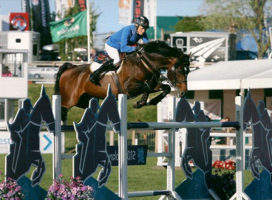Carron Nicol Show Jumping Stallion Mr Visto