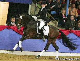 Oldenburg Stallion At Stud in the UK Seano Gold