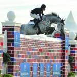 horses_for_sale_horse_scout_david_simpson