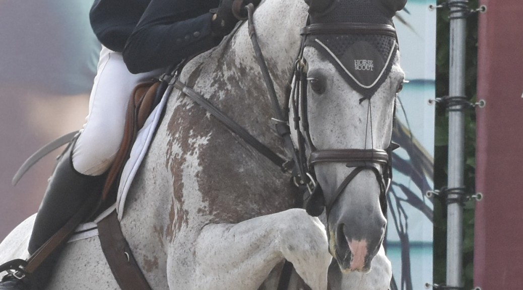steven_franks_internationa_producer_profiled_on_horse_scout