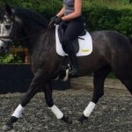 Quality Homebred Grafenstolz mare for Sale on Horse Scout