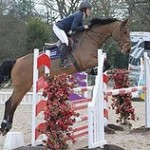 cicero show jumping mare for sale