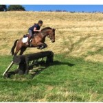 super young event horse by Ramiro B for Sale on Horse Scout