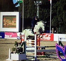young_show_jumper_for_sale_on_Horse_scout
