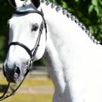 Two Showjumpers advertised for sale on Horse Scout by Cicero Z