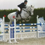 Cevin Z gelding for sale on Horse Scout