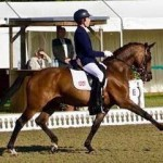 fei-dressage-pony-for-sale-on-horse-scout-by-leuns-velds-lord
