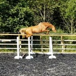 For sale through Horse Scout produced by Aspire Sports Horses