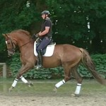 Joe Bright Porduced 4 yeara old dressage prospect advertised for sale on Horse Scout