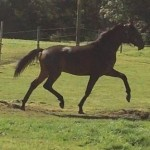 master-merlin-colt-from-dreammaker-stud-advertised-on-horse-scout-for-sale