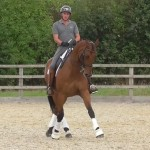 Joe Bright Dressage producing quality dressage horses for sale on Horse Socut