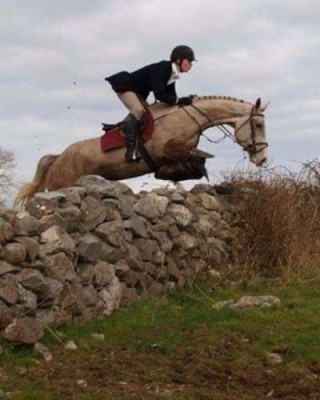 6 year old Hunter advertised on Hrose Scout Horses for Sale pages by Sligo Candy Boy
