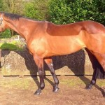 Wish Upon A Staar Event Mare for Sale on Horse Scout
