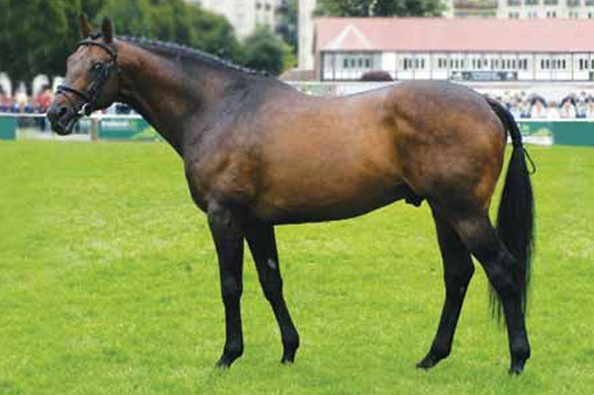 power-blade-progeny-for-sale-on-horse-scout