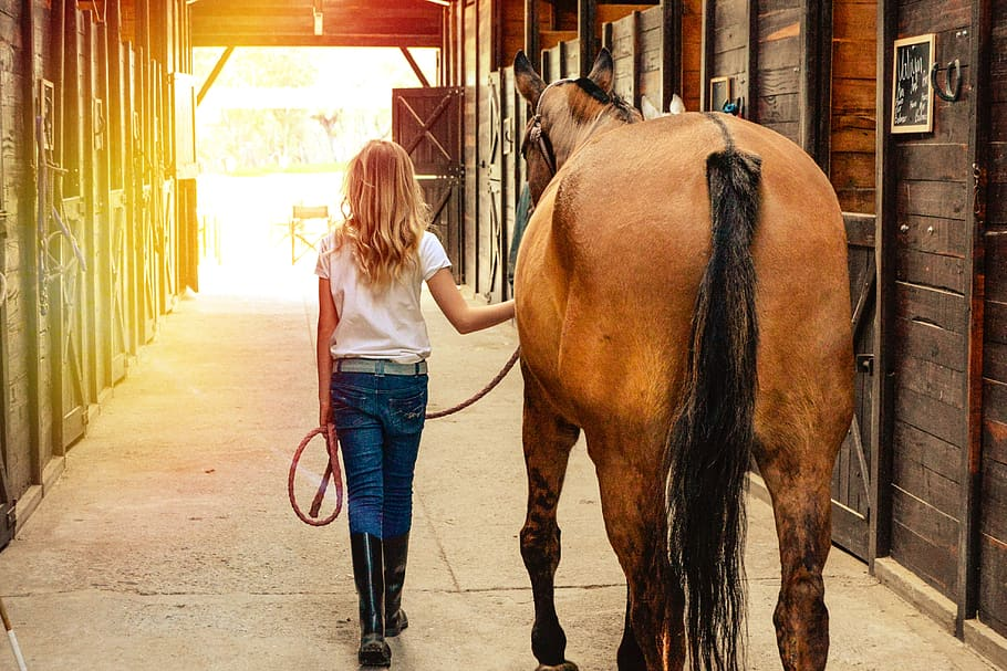 horse-horses-stables-farm-ranch-mare