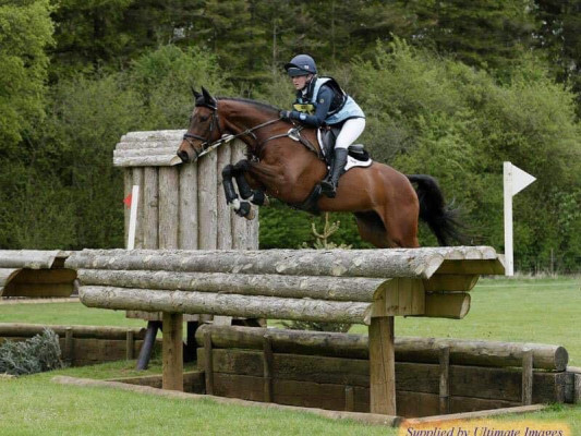 Top Juniors / Young Riders event horse for sale