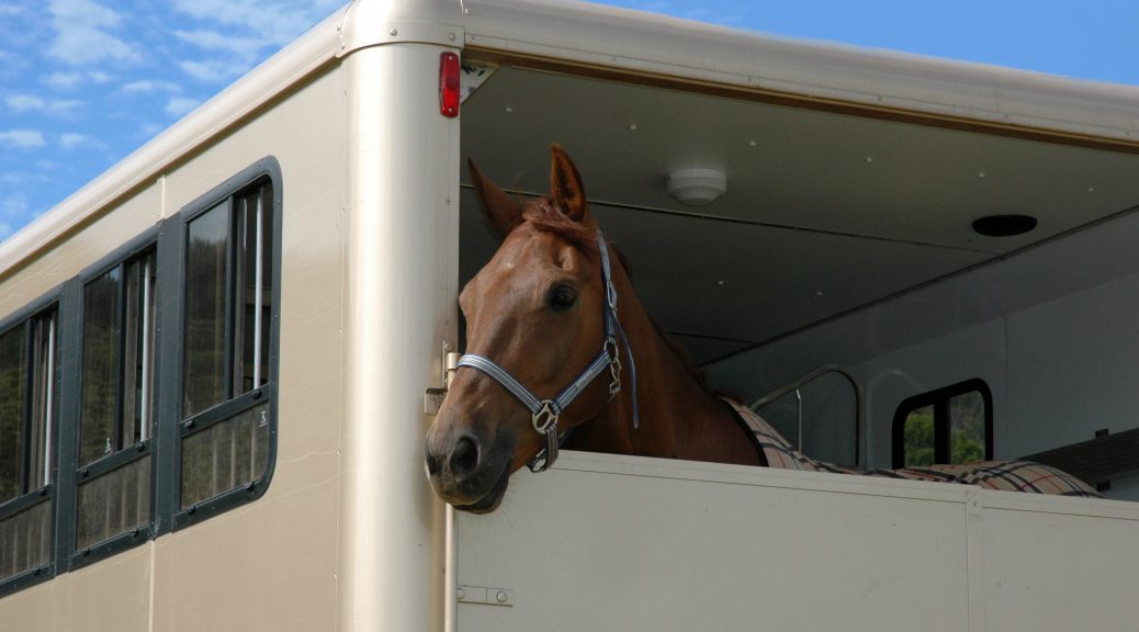 Horse transported in lorry