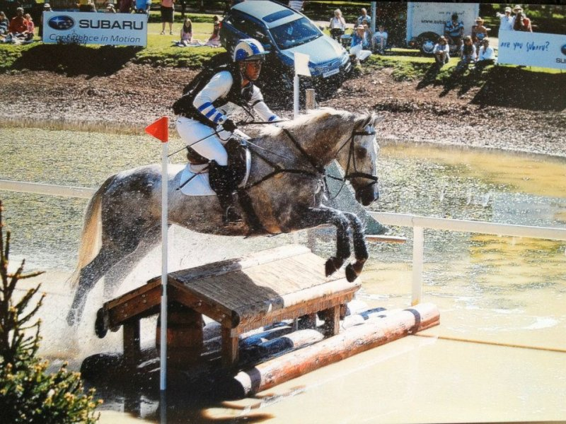 Quob Dynamic - Ringwood, - Horse Scout